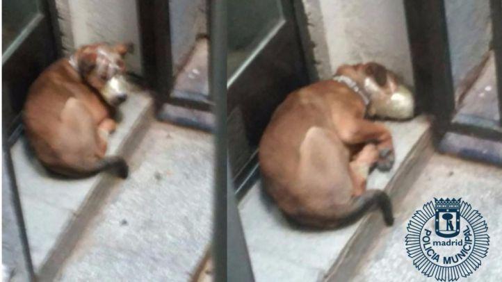 Rescatan a cuatro gatos y dos perros que sufrían maltrato