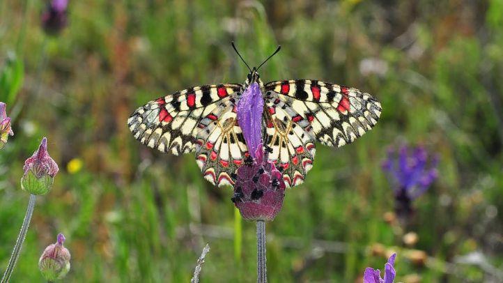 Hayedo de Montejo: un paseo en otoño y un santuario de las mariposas en primavera