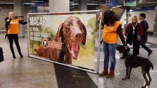 Macario, un perro abandonado, pone cara a la lotería solidaria de El Refugio