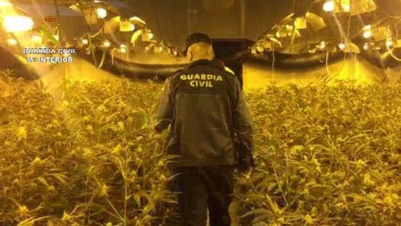 Cae una peligrosa red china de cultivo de marihuana entre Moraleja y Valdilecha