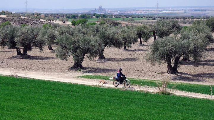 Campos de Arganda con cultivos y olivares