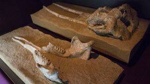 El mapa del Arqueológico Regional o cuando en Madrid no había gatos sino elefantes