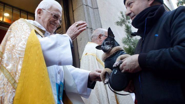 Los animales domésticos reciben este martes la bendición por San Antón