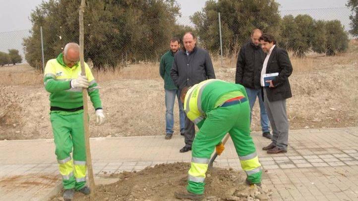 El Ayuntamiento replantará más de 14.000 árboles y talará 213 por riesgo para la ciudadanía