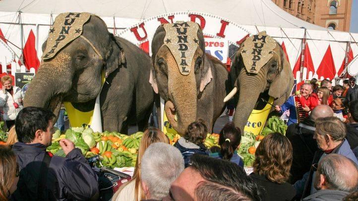 Madrid prohibirá los circos con animales