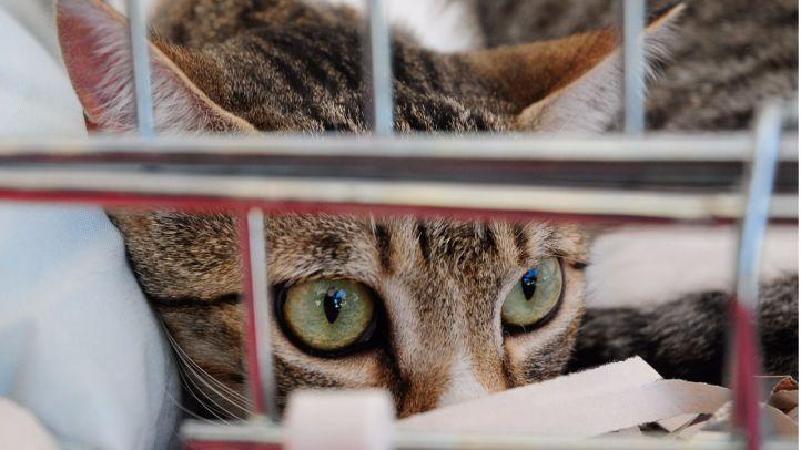 Ley de 'sacrificio cero': una victoria agridulce de los derechos de los animales
