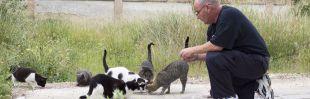 Cuidador de colonias felinas