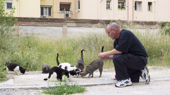 Madrid comienza a expedir carnés de cuidadores de colonias felinas