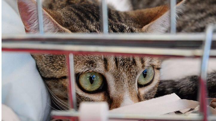 Gato en una jaula.
