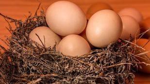 Conoce los beneficios de los huevos ecológicos