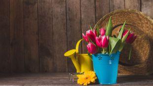 Cómo preparar jardines y huertos para la primavera