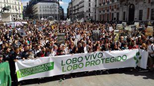 Miles de personas vuelven a pedir en Madrid que se proteja al lobo ibérico por ley
