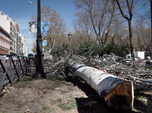 Tala de árboles en el paseo del Prado.