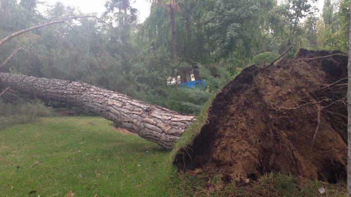 El Ayuntamiento deberá pagar 710.000 euros a la familia del hombre que falleció por la caída de una rama en El Retiro