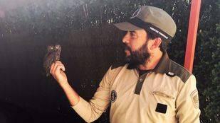 Autillo rescatado por los agentes  forestales de la Comunidad de Madrid.