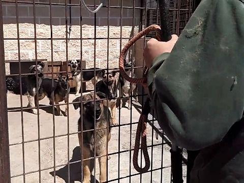 Rescatados 60 perros de una nave ilegal de San Sebastián de los Reyes