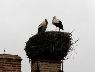 Soto del Real recurrirá a nidos artificiales para controlar la población de cigüeña blanca