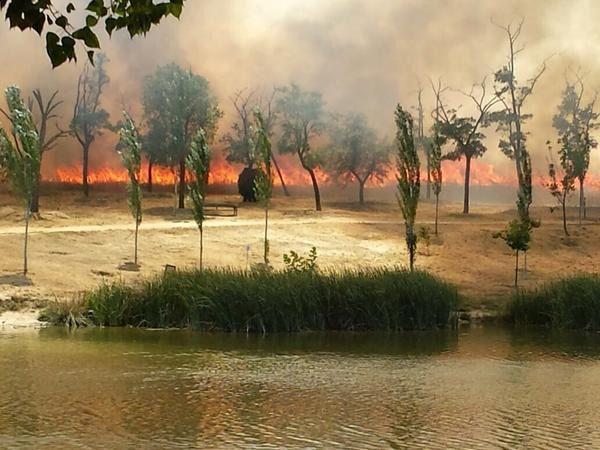 Detenido en Leganés el presunto autor del incendio del Parque Butarque, que calcinó 15 hectáreas