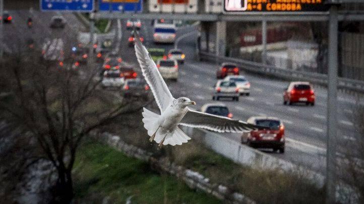 El Área de Medio Ambiente del Ayuntamiento de Madrid cuenta con una larga trayectoria a favor de una ciudad más limpia y ecológica