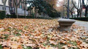 Madrid recupera la campaña de recogida de hojas
