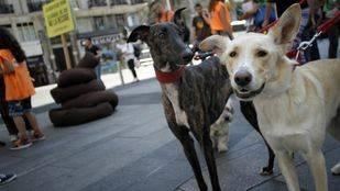 La web de adopción animal del Ayuntamiento de Madrid logra nueva casa al 92% de los animales anunciados