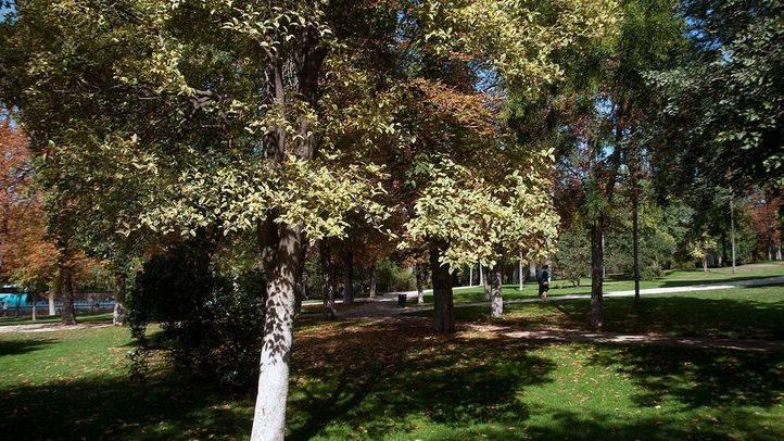 Getafe destinará 350.000 euros a la poda de árboles, desbroce, y control de enfermedades y plagas