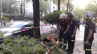 Tres heridos tras caer una rama de un árbol en Madrid