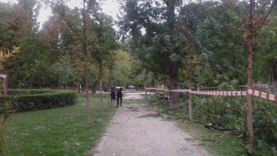 Caída de una rama de un árbol por la tormenta