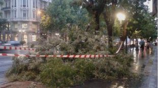 605 árboles resultaron afectados por la tormenta