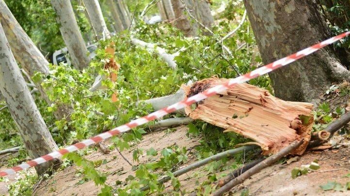 244 árboles fueron dañados por la tormenta de Aranjuez, según Patrimonio Nacional