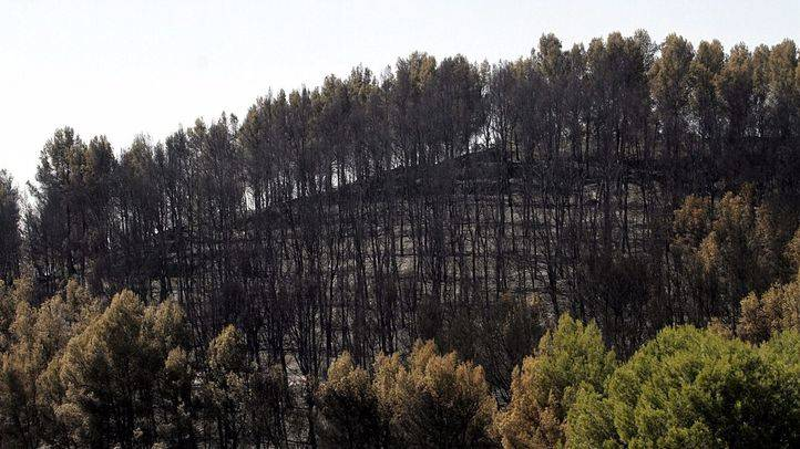 La Comunidad impulsa la prevención de incendios en las urbanizaciones enclavadas en terreno forestal