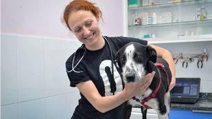 UPyD critica a Cifuentes por no concretar qué se hará con los animales abandonados recogidos por la Comunidad