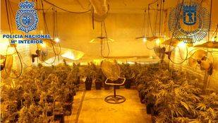 Desmantelado un local destinado al cultivo de marihuana en Puente de Vallecas