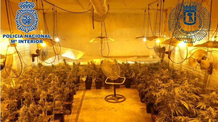 Local desmantelado donde se cultivaba marihuana para su posterior venta