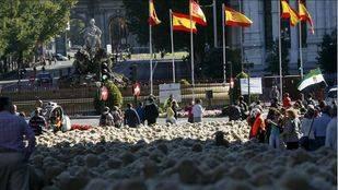 Unas 2.000 ovejas pasean por Madrid durante la XXII Fiesta de la Trashumancia