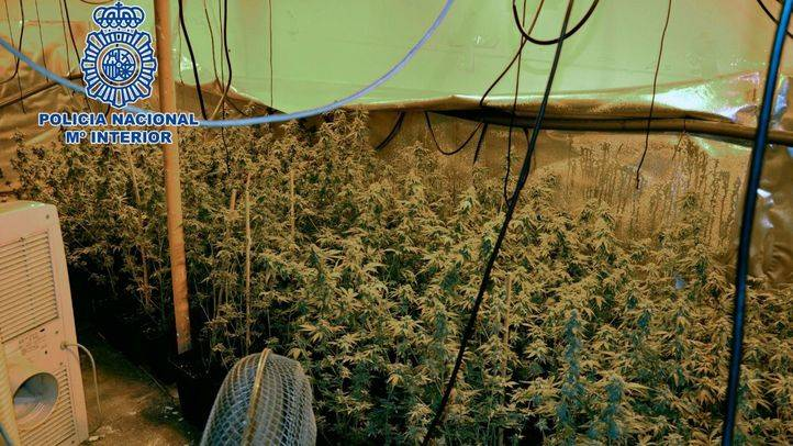 Desmantelada una plantación de marihuana en un piso okupado de Fuenlabrada