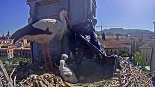 La televisiva cigüeña de Alcalá de Henares arropa a sus polluelos con una bolsa de plástico