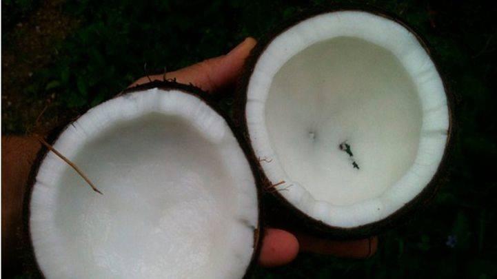El aceite de coco: quema grasa perfecto y natural