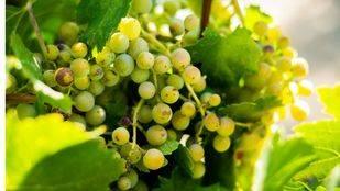 """""""Sin mala uva"""" una guía con más de 700 vinos catados por su autor, Ernesto Gallud"""