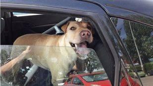 Denunciado un hombre que dejó a sus dos perros en el coche mientras estaba en la piscina