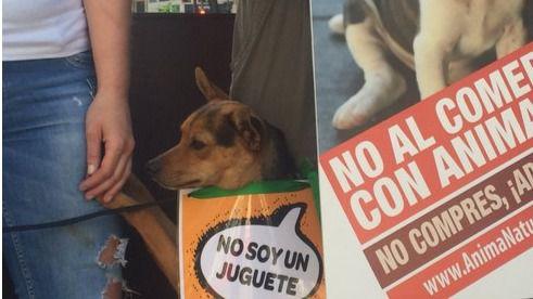 Protesta en Callao contra la compra de animales y en favor de la adopción