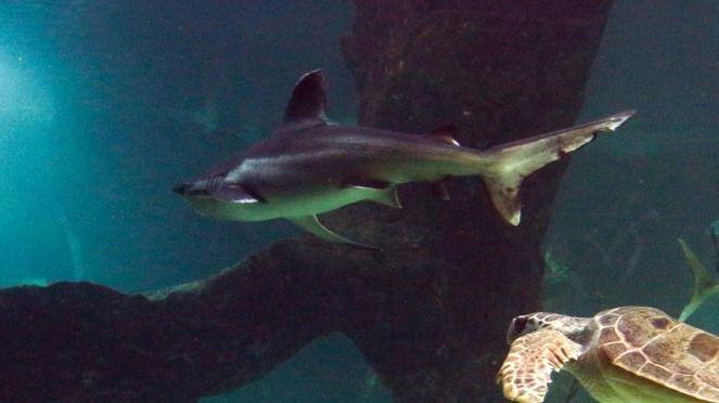 Un tiburón muerde a una turista madrileña cuando se bañaba en una playa de Gran Canaria