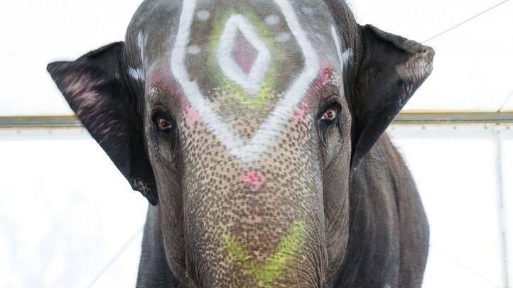 Elefante en un circo de Madrid