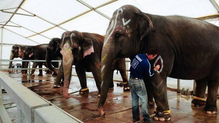 Elefantes en un circo de Madrid