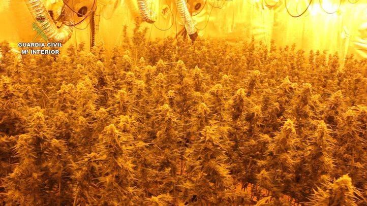 Tres detenidos en Villanueva de Perales por cultivar más de mil plantas de marihuana