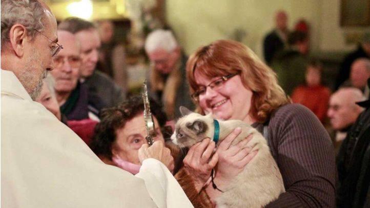 Las Fiestas de San Antón incluirán seis puntos de adopción animal