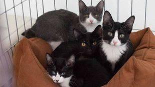 El gobierno local prepara una nueva ordenanza sobre tenencia y protección de animales