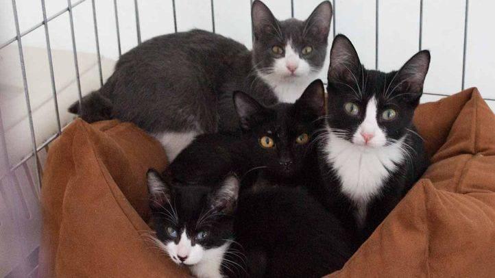 Salón de adopción de mascotas de la Comunidad de Madrid (archivo).