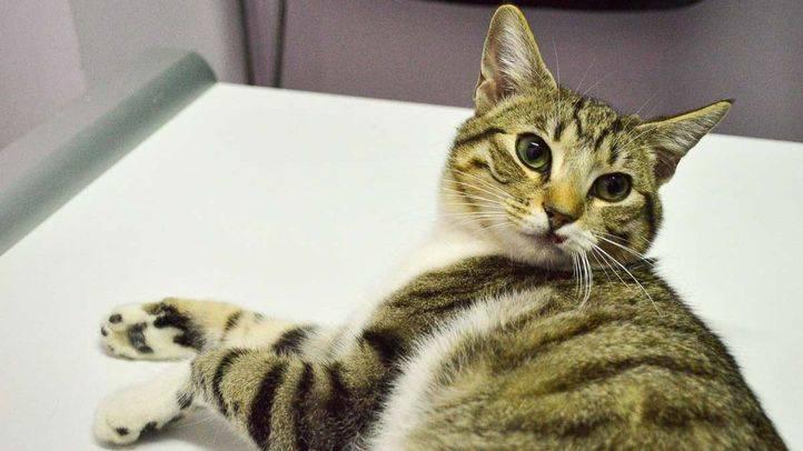Madrid Salud quiere establecer colonias urbanas de gatos callejeros