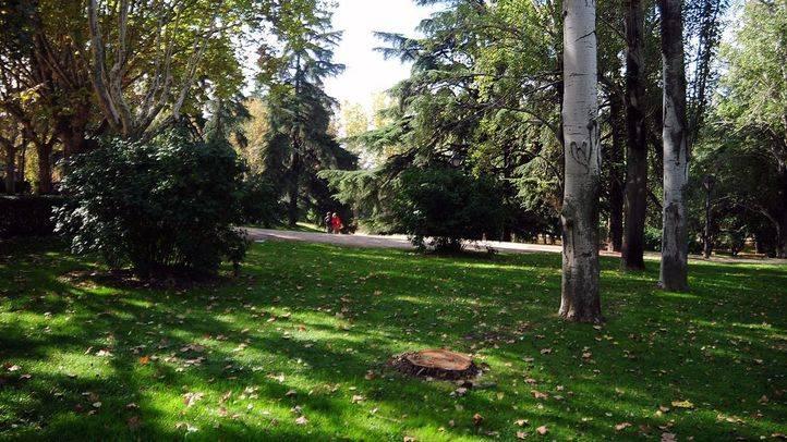 Madrid cambia el riego de los cedros del Parque del Oeste ante su declive